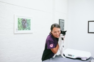 The Cat vet Clinic, Melbourne