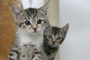 2 kittens staring