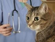cat kitten vaccinations vaccines