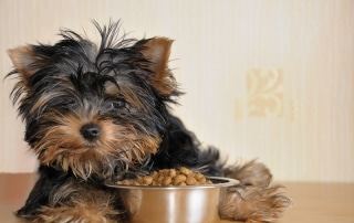 what sort of dog food is best for my pooch