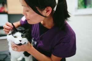 Health Check on a cat