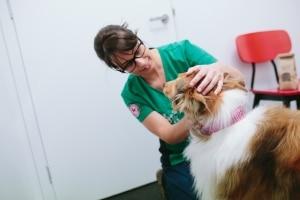 dog checkup