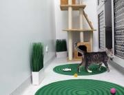 cat at cat boarding facilities