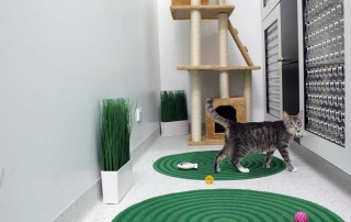 cat boarding facilities