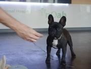 puppy at reception