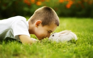 Rabbit Calivirus: Boy with a Rabbit