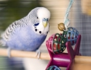 bird playing with toy