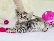 kitten toys playing environment