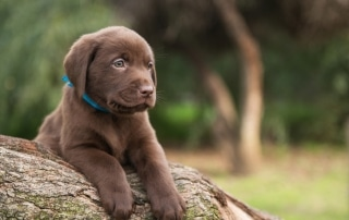 puppy socialisation and desensitisation