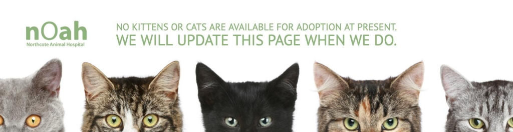 No kittens or cats available for adoption at present.